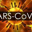 CORONAVIRUS: ¿Cuánto dura en las superficies inanimadas?¿Puede ser inactivado?